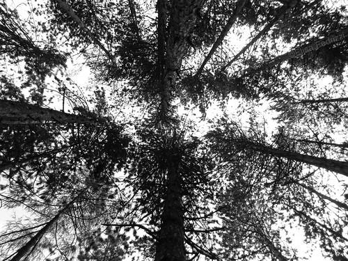 sky bw italy white black mountains tree nature contrast landscape photography nikon trentino