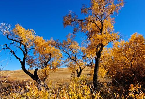 landscape colorado 110160mmf28
