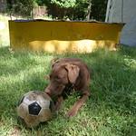 Dog, ball, plow