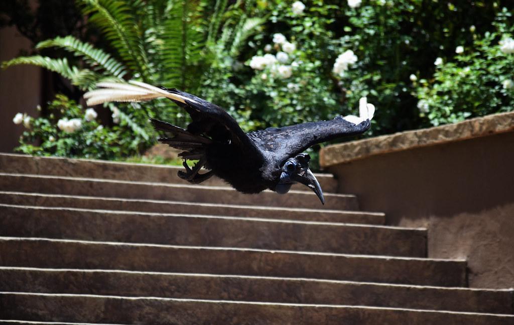 Flights of Fantasy show in Montecasino Bird Gardens