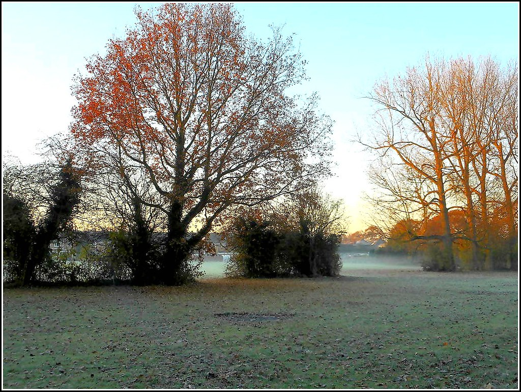 Frosty Morning on the Field .