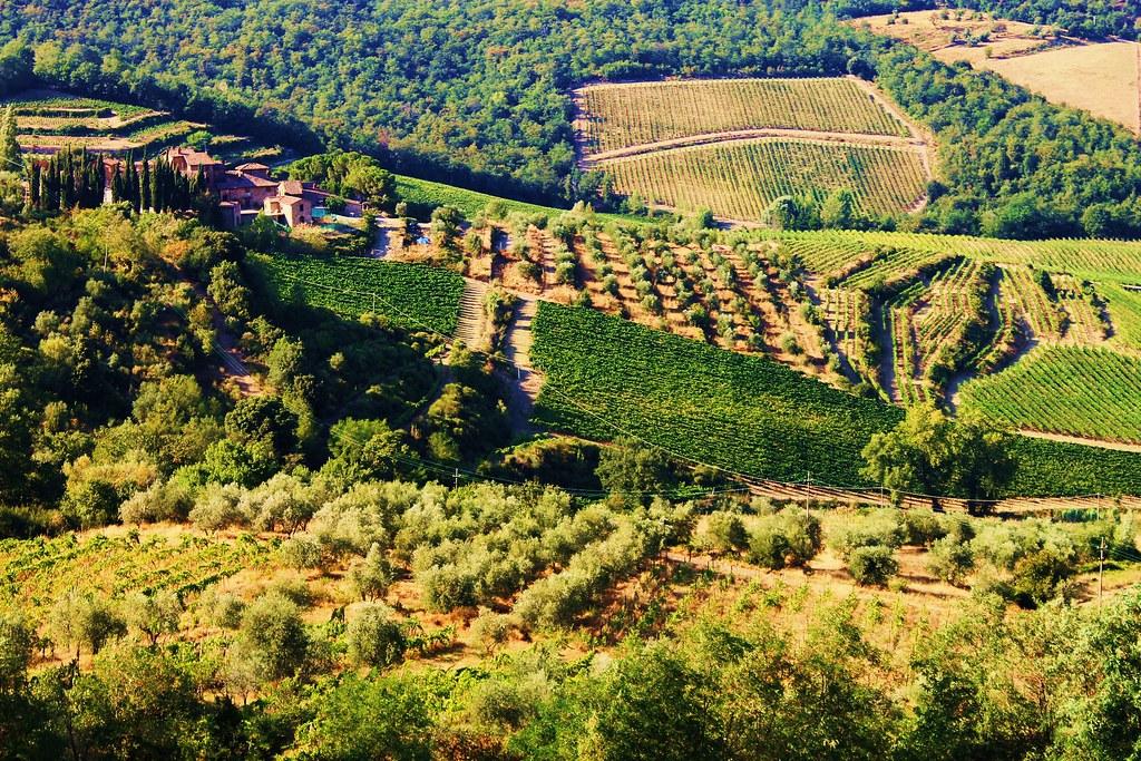 azienda vinicola nel chianti