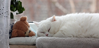 sleeping | by Karamellzucker