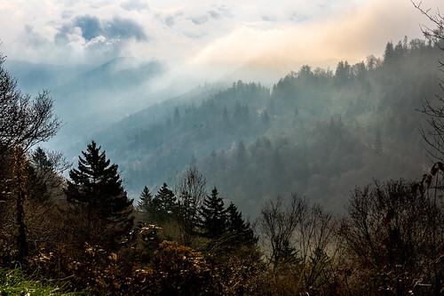 autumn fall flickr mist tennessee tree ngc greatsmokymountains portfolio misttennessee