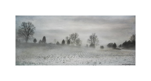 trees winter bw texture field fog vintage grey gray harding whitelake hss springvalley happyslidersunday lenabemanna