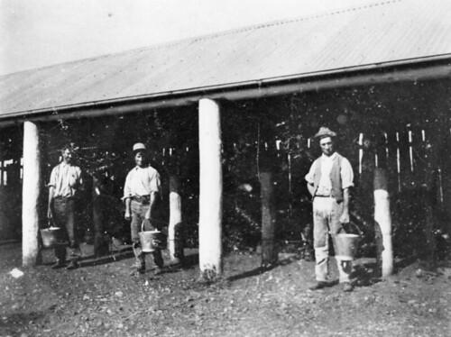 buildings milk farm queensland buckets 1915 farmworkers statelibraryofqueensland dairyfarms slq milkacrossthecommons