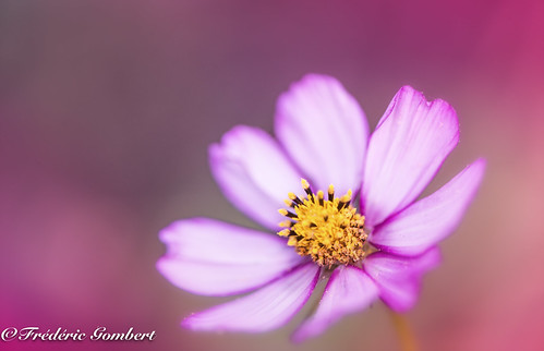 World pink portrait | by frederic.gombert