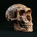 Neanderthal - Photo (c) NCSSM, some rights reserved (CC BY-NC-SA)