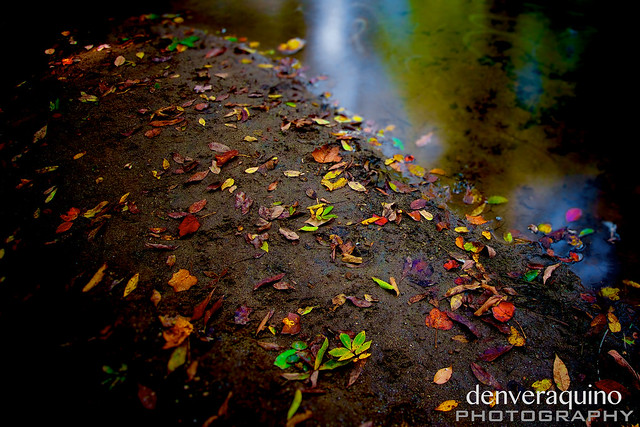 Leaves on the Bank