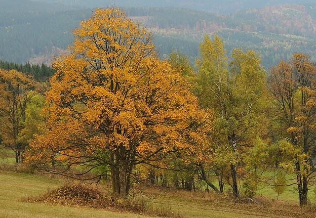 Jeseníky - Louky nad Kronfelzovem