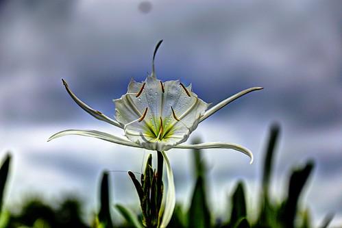 park flower sc canon spider canal lily state south rocky ii carolina usm shoals 6d f28l landsford ef2470mm