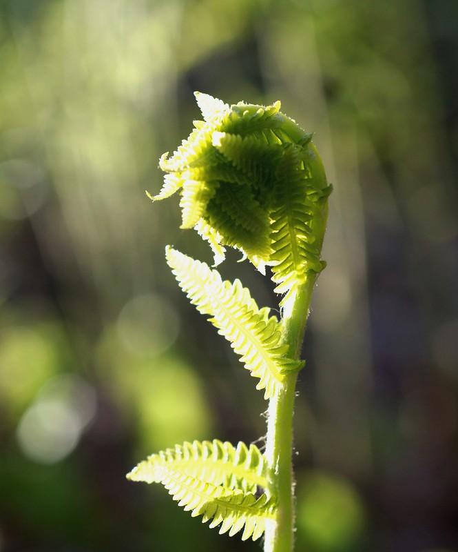 ~Nature's Prayer~