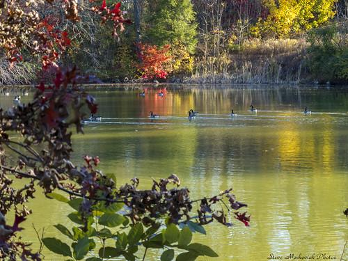 smack53 dukefarms hillsborough newjersey water lake pond reflections autumn autumncolors autumnseason fall fallcolors fallseason foliage scenic scenery outdoors outside landscape canon powershot g12 canonpowershotg12