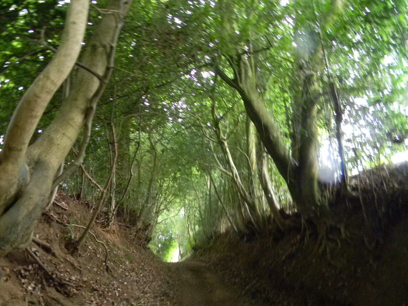 Sunken pathway Milford to Haslemere