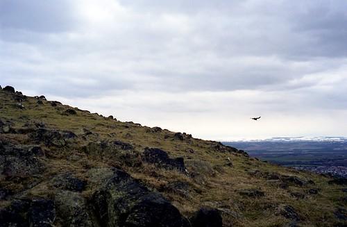 "Image titled ""Bird, Descending Arthur's Seat, Edinburgh."""