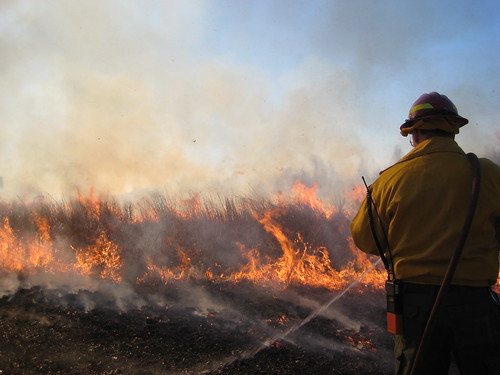 Photo of firefighter at a brush fire