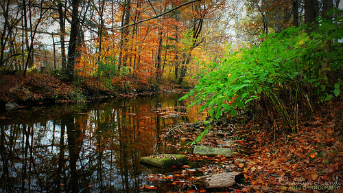 autumn trees light fall nature water leaves forest reflections river landscape log northampton woods rocks colorful stream shadows natural forrest pennsylvania ngc scenic pa picturesque bushes pennsville petersville mygearandme mygearandmepremium carolynlandi