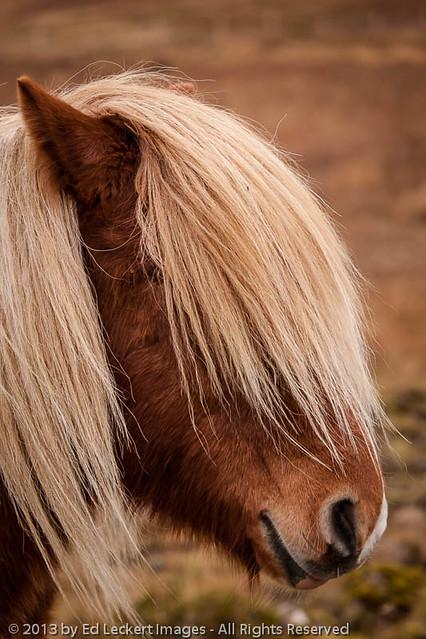 I Gotta Get a Haircut, Snaefellsnes Peninsula, Iceland
