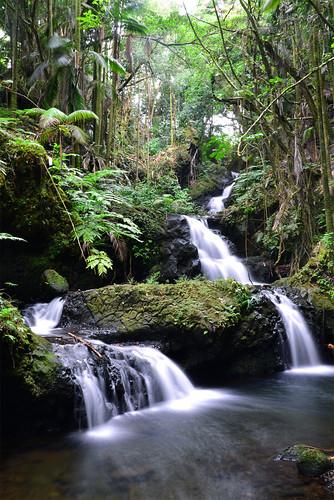 garden botanical hawaii falls tropical bigisland hawaiitropicalbotanicalgarden onomea onomeafalls papaikou
