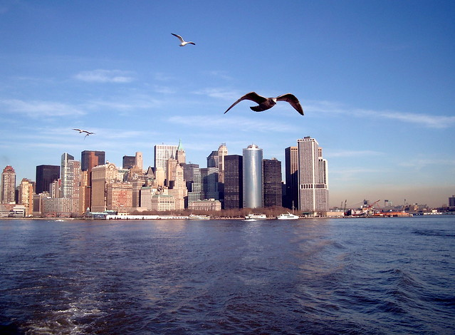 New York skyline with birds