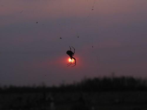 sunset sun sol méxico mexico atardecer spider dof bokeh web araña pdc telaraña pdk suno meksiko tepetlaoxtoc noktiĝo araneo