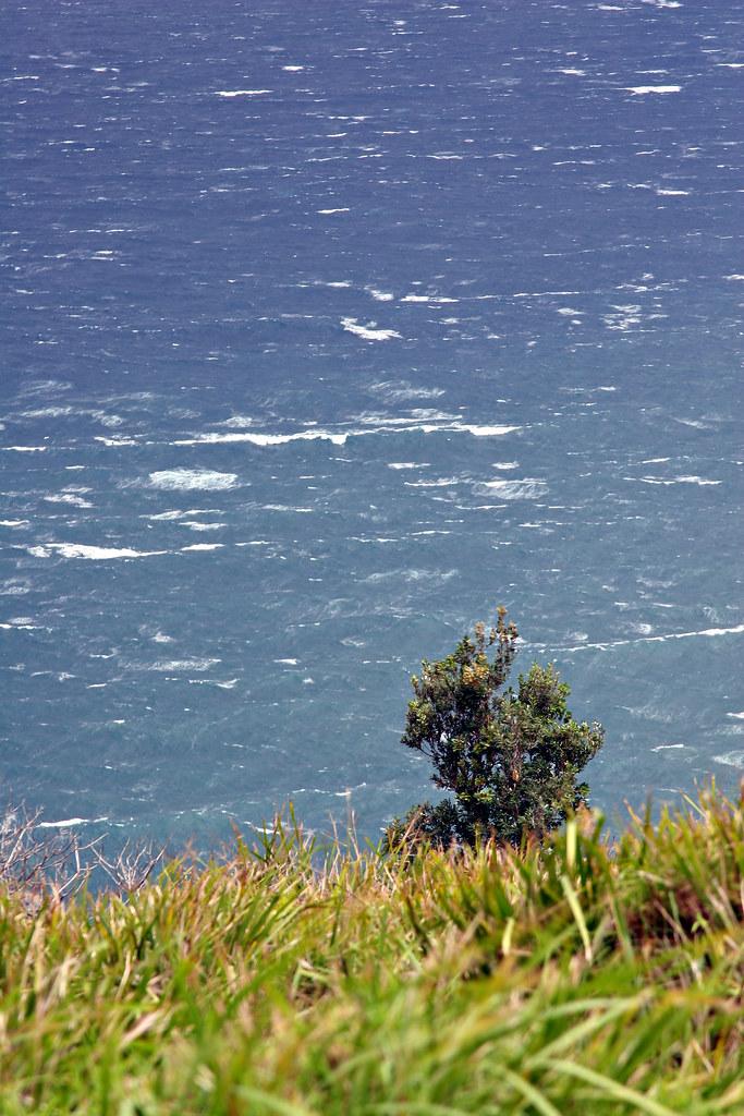 Image: Windswept Coast at Stanwell Tops