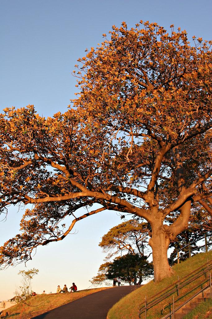 Image: Autumn Afternoon
