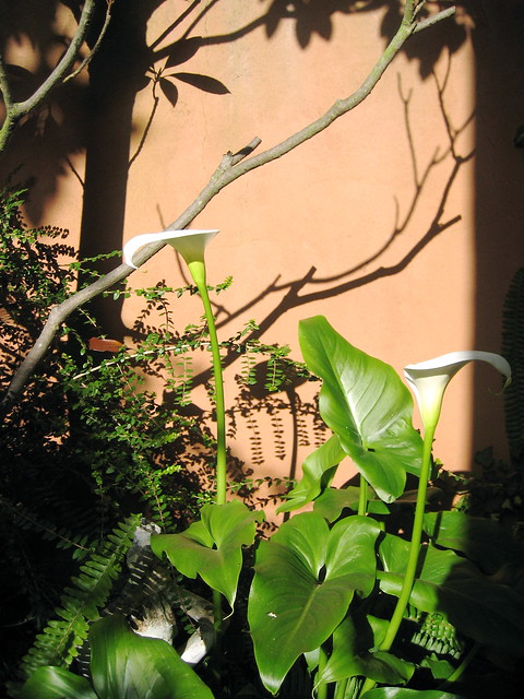 Late afternoon in my garden