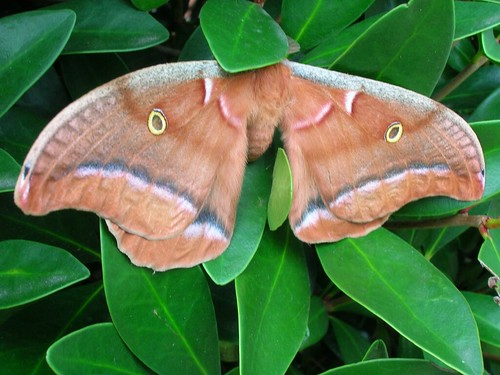 moth with fake eyes | by ((brian))