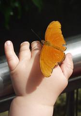 Butterfly | by ceeshek