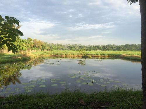 morning pond philippines lilly villaescudero