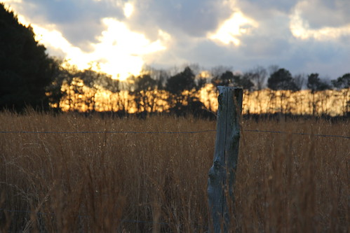 sunset field fence golden post horizon treeline barbwire oldfence oldwoodenpost