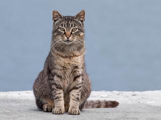 California Marina Cat   by Ingrid Valda Taylar