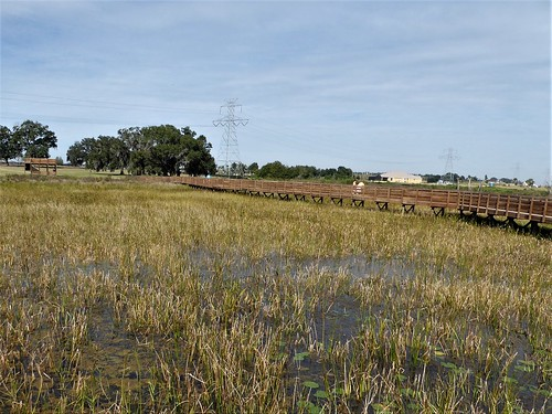 florida thevillages nature flora marsh boardwalk trail grass wood landscape