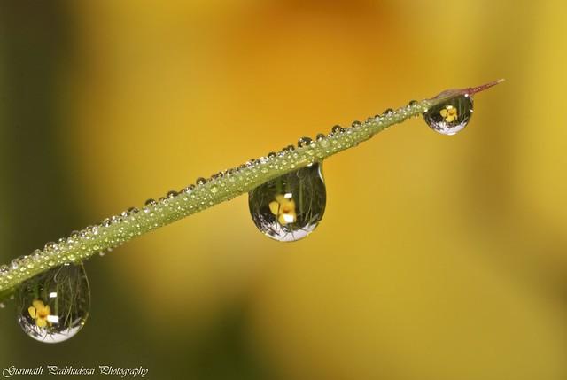 The magic of dew...