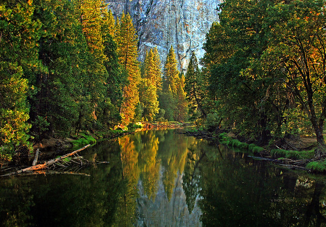 Afternoon Reflections in the Merced River-Yosemite National Park CA 0314