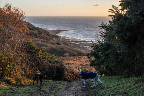 warrenglen hastingscountrypark flori lurcher johnny greyhound coast sea