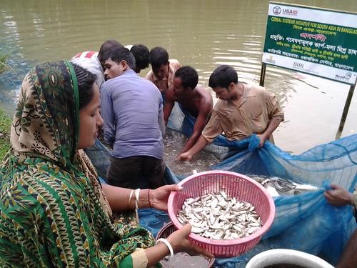 asia development bangladesh gender methodology fishculture