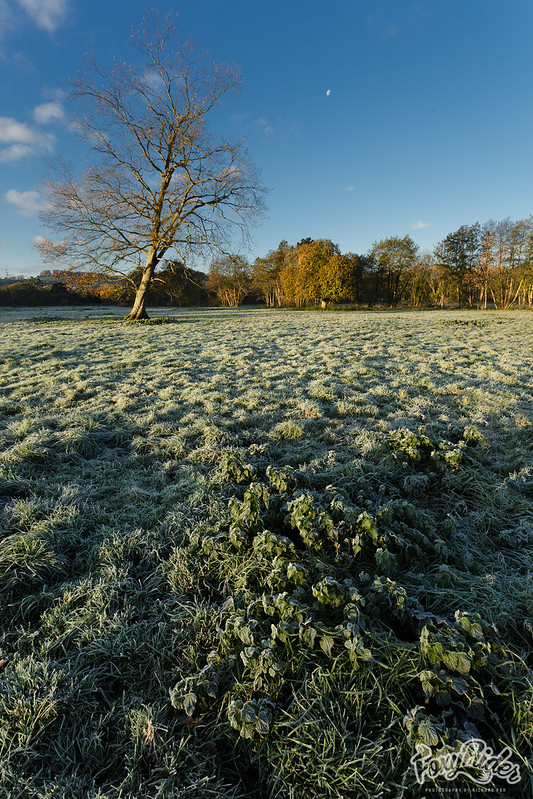 Frosty Nettles with Late Moonset
