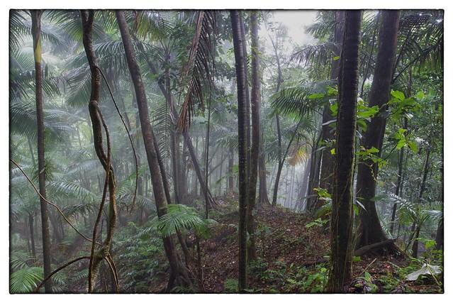 Into the Mist - El Yunque Rainforest, Puerto Rico
