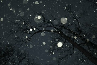 night snowflakes