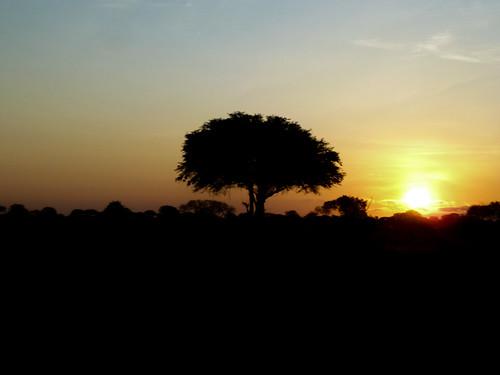 park east national kenia mombasa tsavo taitataveta