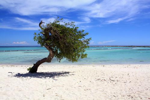aruba beach caribbean tree summer 2010