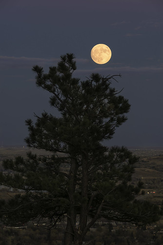 boulder bouldercounty colorado greatplains pinusponderosa ponderosapine bluehour fullmoon moon moonrise pine plains supermoon tree nasasupermoon