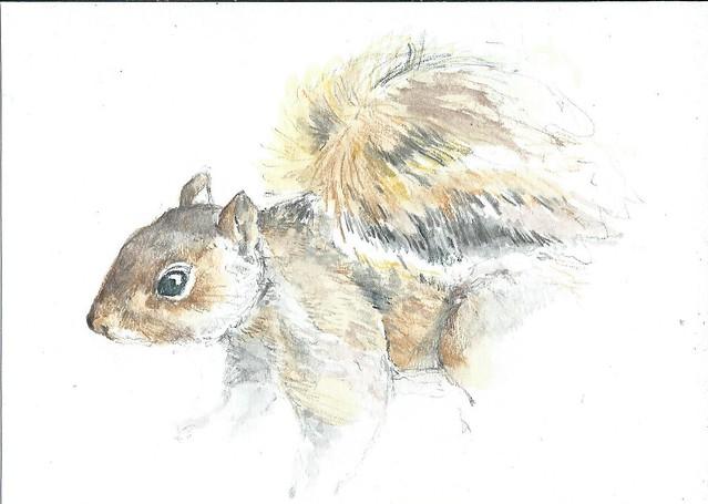 23Sept13 squirrel 3 of 3