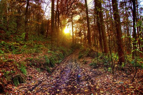 trees light sunset england walking woods europe cheshire britain hdr sandstonetrail berwardsley