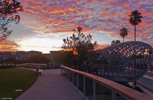 california trees sculpture clouds sunrise palms landscape dawn santamonica cities parks sidewalk greenspace tongvapark