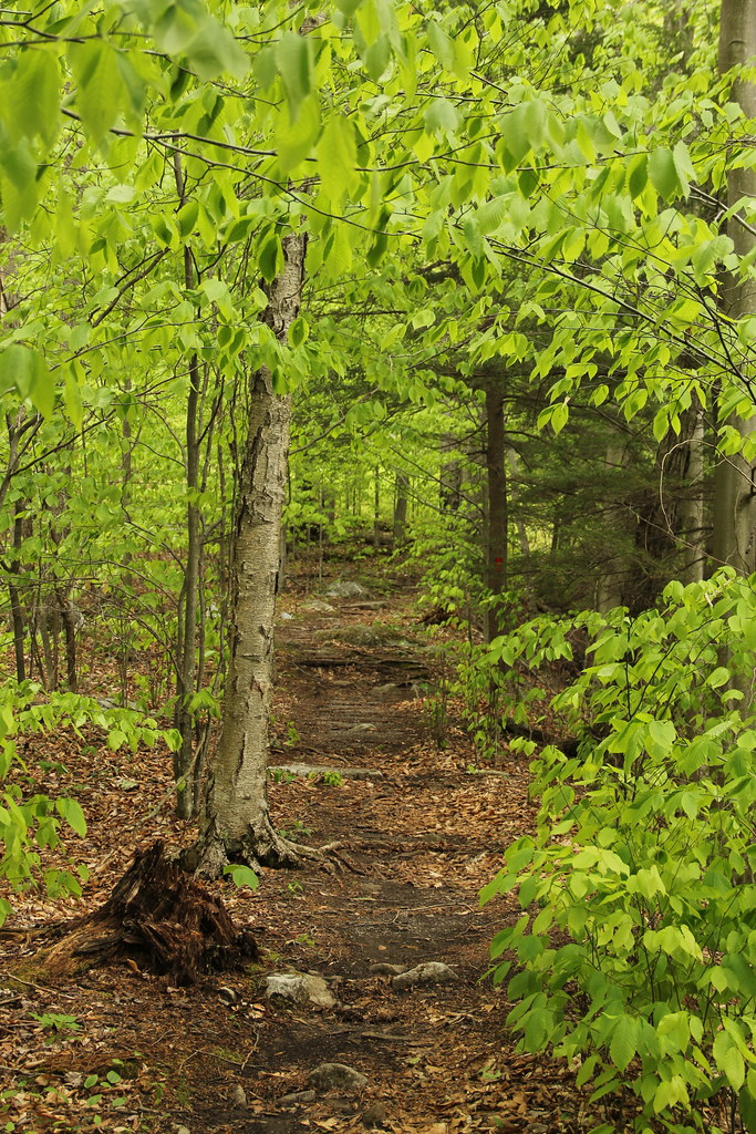 Worlds End State Park - High Rock Trail | Worlds End State P