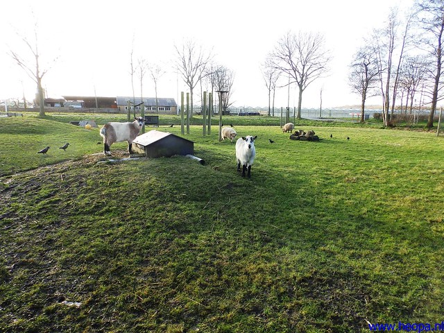 11-01-2014 Rijswijk   RS80    25 Km  (136)