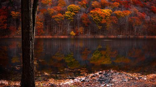 2016 autumn connecticut connecticutphotography fall fallcolors forest guiffridapark landscape landscapephotography nature naturephotography november outdoors seascape unitedstates woods digital reservoir brilliant